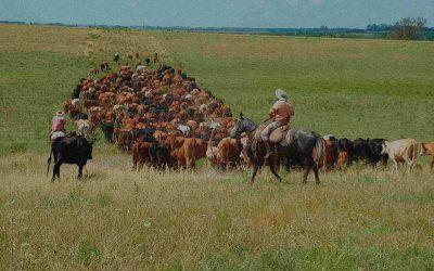 De fazenda improdutiva à referência nacional
