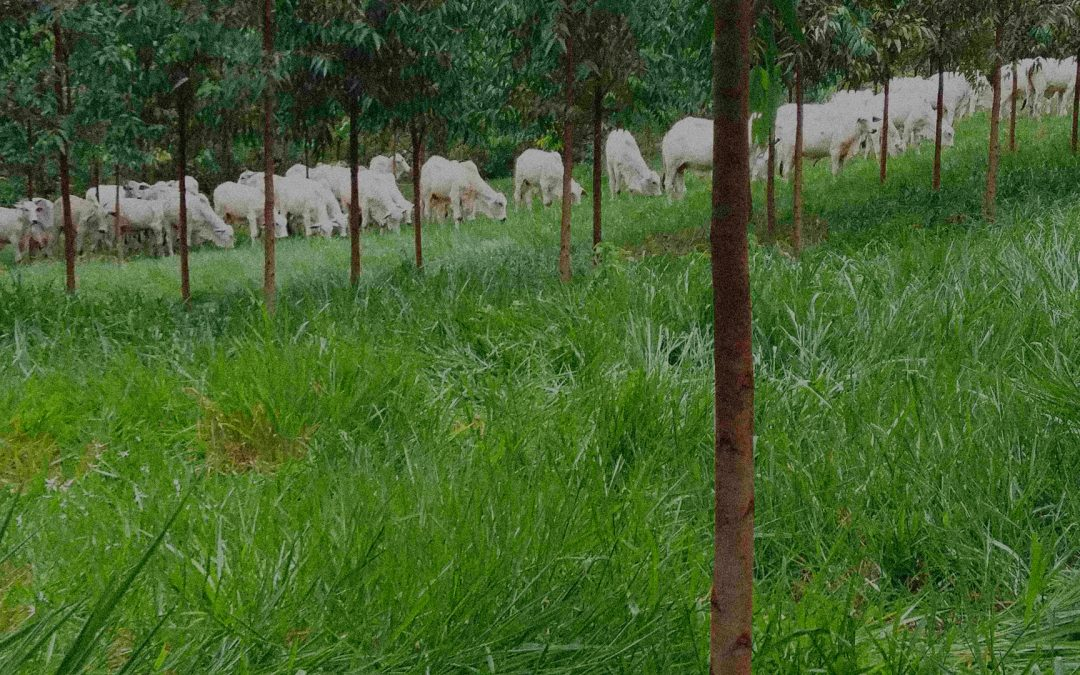 Sistemas de Pastoreio