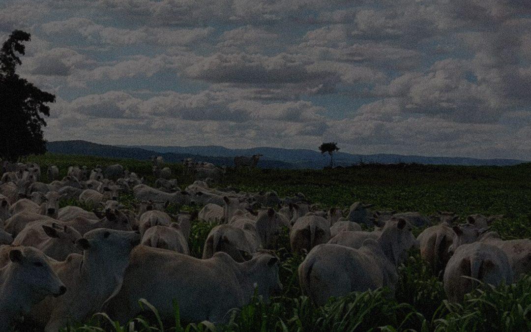 Sistema Voisin: O caminho para a pecuária lucrativa