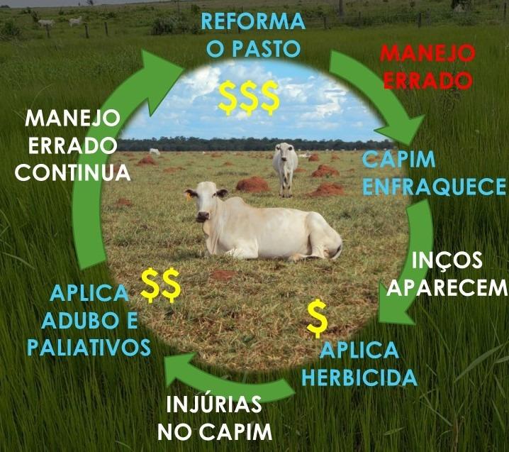 O ciclo vicioso do prejuízo a pasto